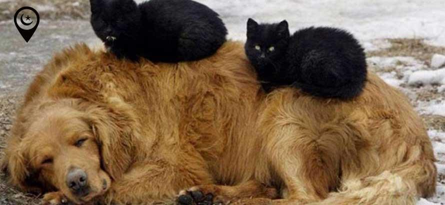 kopek-kediler